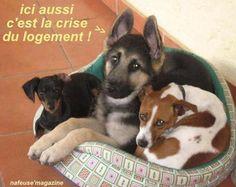 HUMOUR - Drôles de bêtes... - Page 17 6c877110