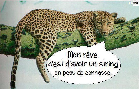 HUMOUR - Drôles de bêtes... - Page 17 73829510