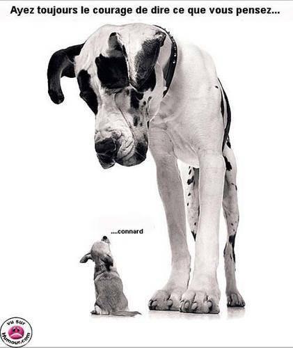 HUMOUR - Drôles de bêtes... - Page 17 79315910