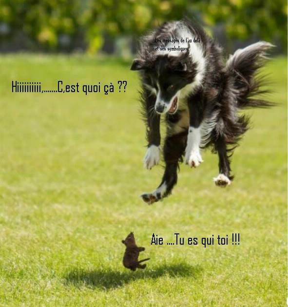HUMOUR - Drôles de bêtes... - Page 20 7da56810