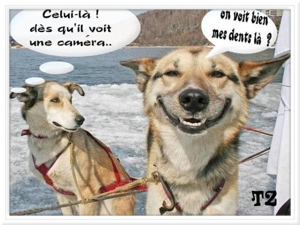 HUMOUR - Drôles de bêtes... - Page 20 Ad64e010
