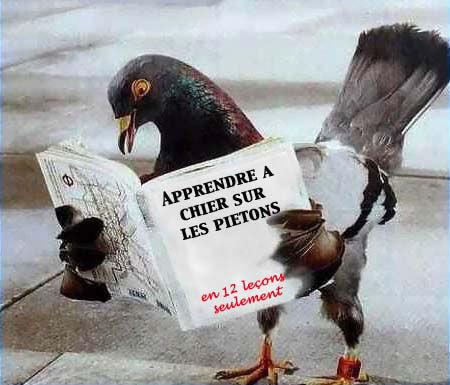 HUMOUR - Drôles de bêtes... - Page 17 Oiseau10