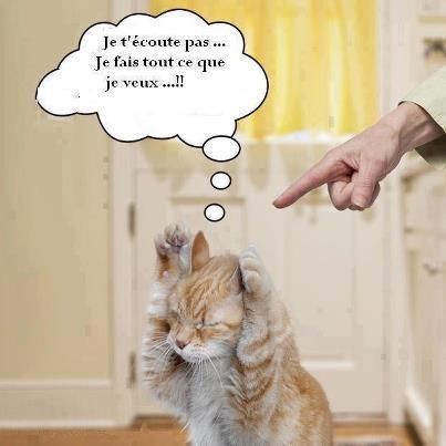 HUMOUR - Drôles de bêtes... - Page 17 Photo-11