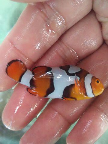Nemo-nemo spesial @Mutiara Aquamarine 1_1210