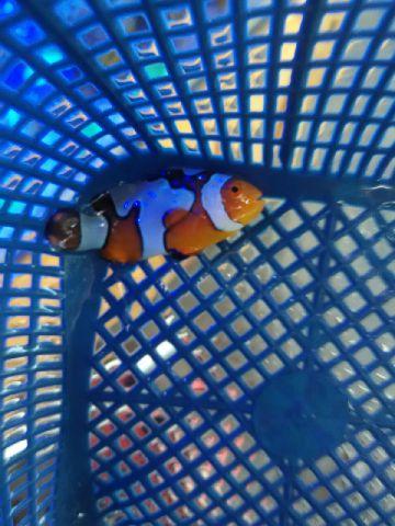 Nemo-nemo spesial @Mutiara Aquamarine 1_1710