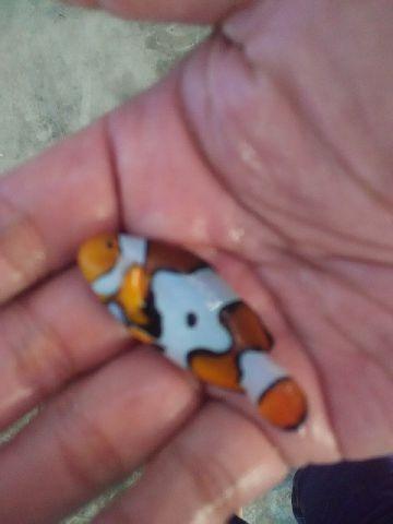 Nemo-nemo spesial @Mutiara Aquamarine 1_1810
