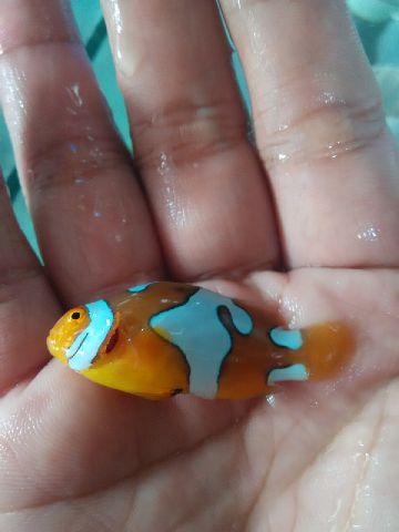 Nemo-nemo spesial @Mutiara Aquamarine 1_210