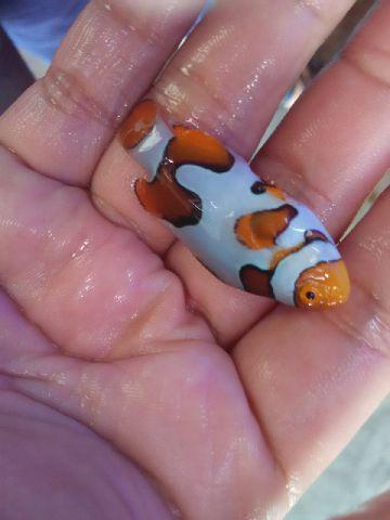 Nemo-nemo spesial @Mutiara Aquamarine 1_2110