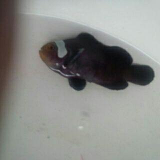Nemo-nemo spesial @Mutiara Aquamarine 1_2210