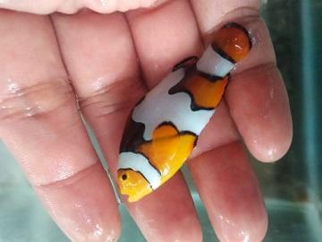 Nemo-nemo spesial @Mutiara Aquamarine 1_310