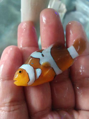 Nemo-nemo spesial @Mutiara Aquamarine 1_610