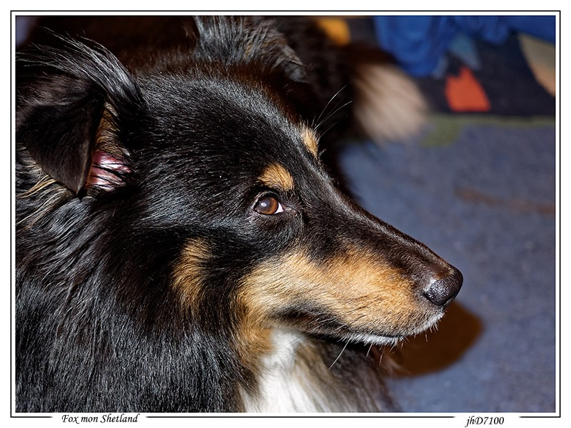 [fil ouvert] Les chiens, nos amis Fox10