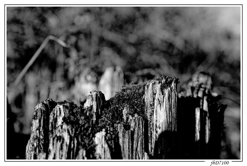 Thème du mois de mai - Noir & Blanc Jp6_3310
