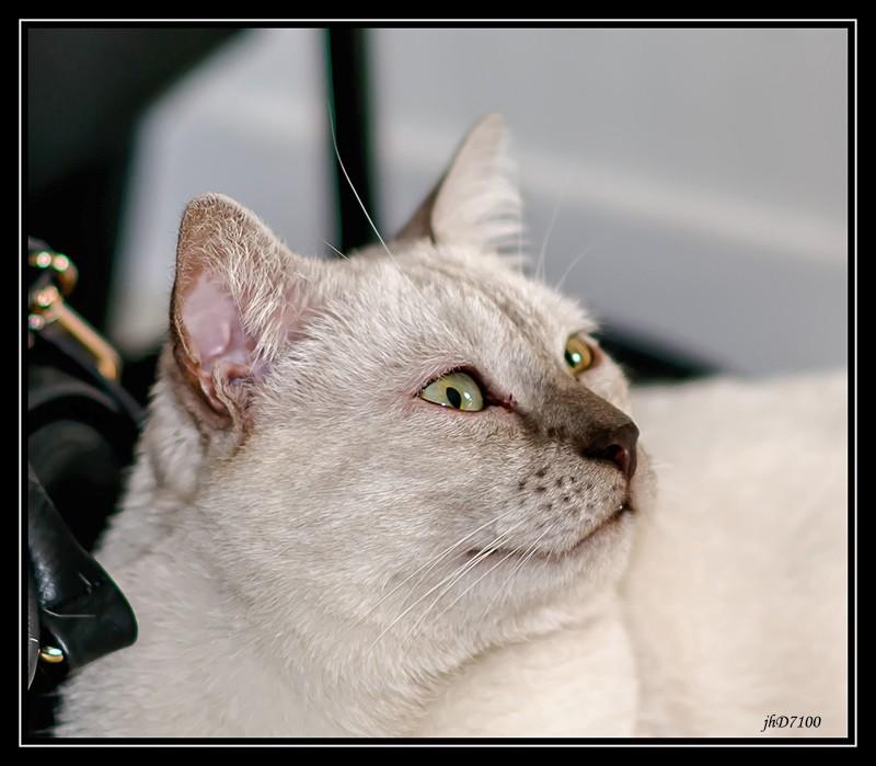 [fil ouvert] Les chats  Jp6_5110