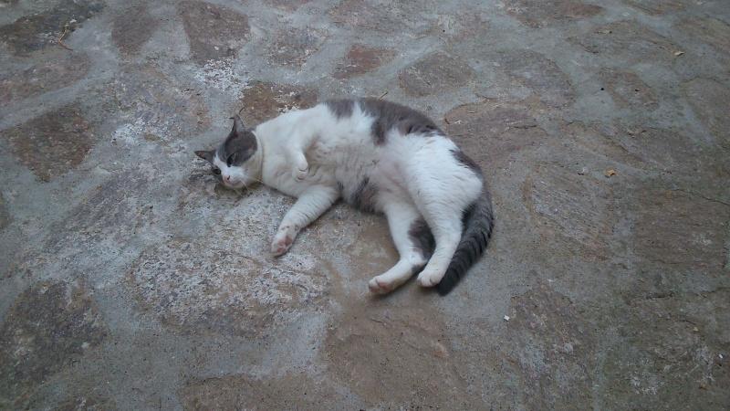 Ces chats d'un jour. Dsc_0510