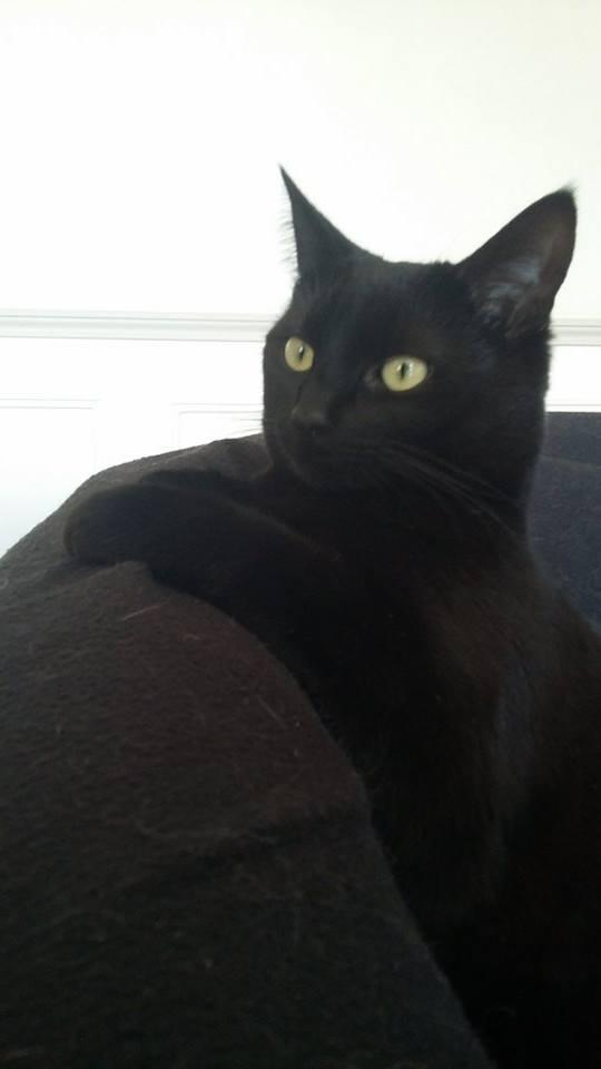 Lumen, Belle perle noire née le 06/04/2015 12921011