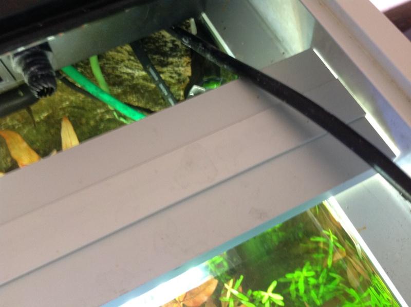 je me présnte  et mon aquarium Img_0313