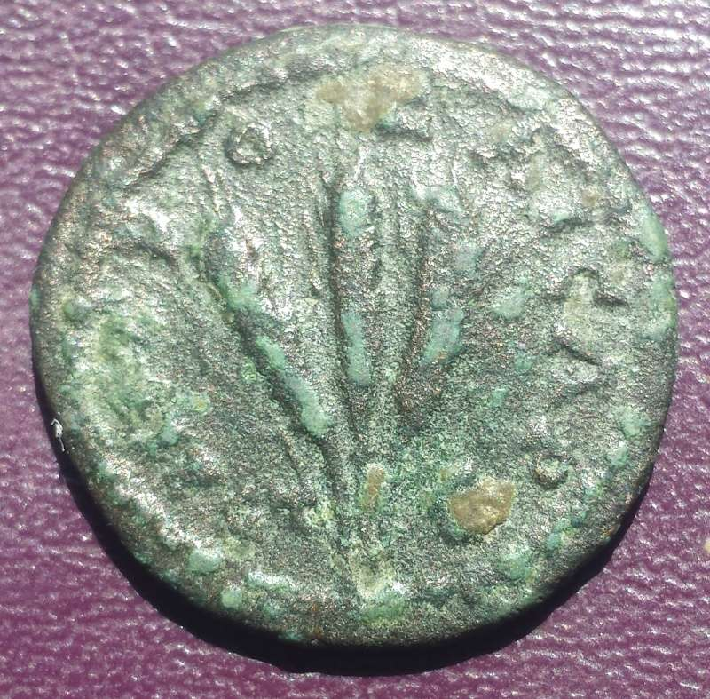 Bronze Colonial de Sévère Alexandre pour Caesaré en Cappadoce ... 20160417