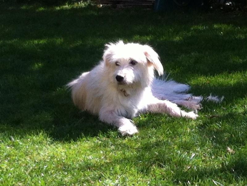 LAGOON - chien mâle croisé labrit né en 2015 (Alina) - adopté par Michel et Martine (67) - Page 2 Lagoon10