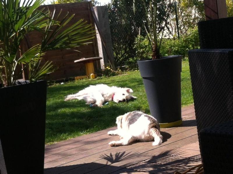 LAGOON - chien mâle croisé labrit né en 2015 (Alina) - adopté par Michel et Martine (67) - Page 2 Lagoon12