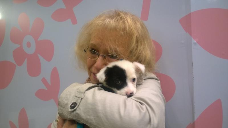 SISSI (ex ARLEQUINE), chiot femelle, née en décembre 2015 - REMEMBER ME LAND - adoptée par Irène (dpt74) Wp_20111