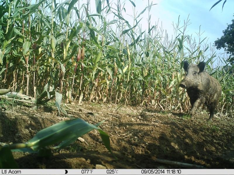 chasse photographique Sangli10