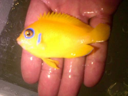 Foto Ikan Import ECOREEF sudah tiba 15 April 2016 Img-2017