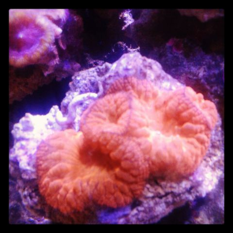 Coral pilihan 500+ in Stock Img_2010