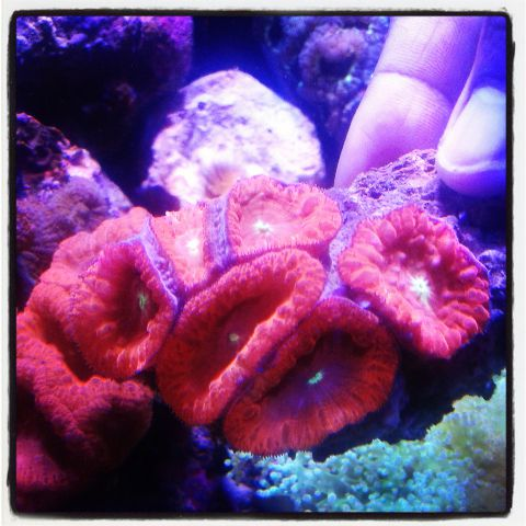 Coral pilihan 500+ in Stock Img_2012
