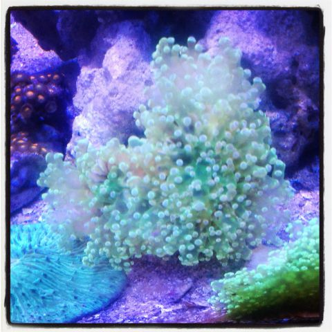 Coral pilihan 500+ in Stock Img_2014