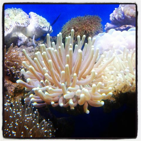 Coral pilihan 500+ in Stock Img_2016