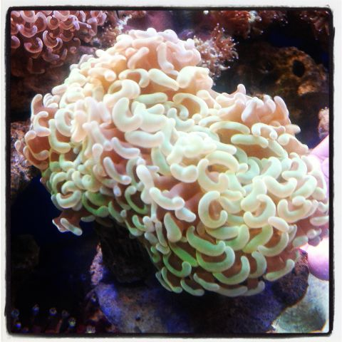 Coral pilihan 500+ in Stock Img_2019