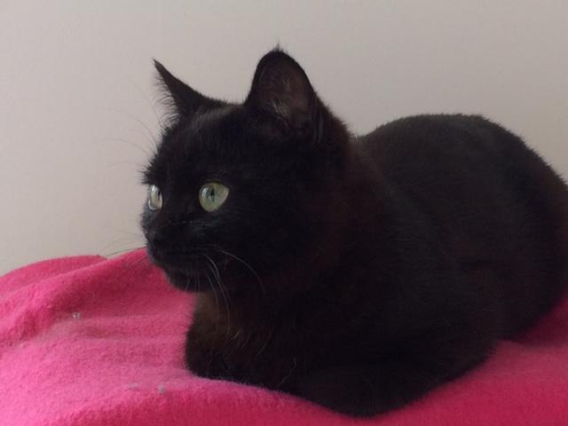 Myrtille, femelle noire née en novembre 2015 Img_0010