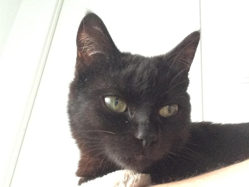 Myrtille, femelle noire née en novembre 2015 Img_0012