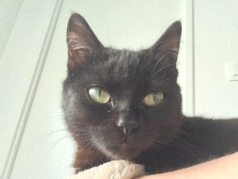 Myrtille, femelle noire née en novembre 2015 Img_0013