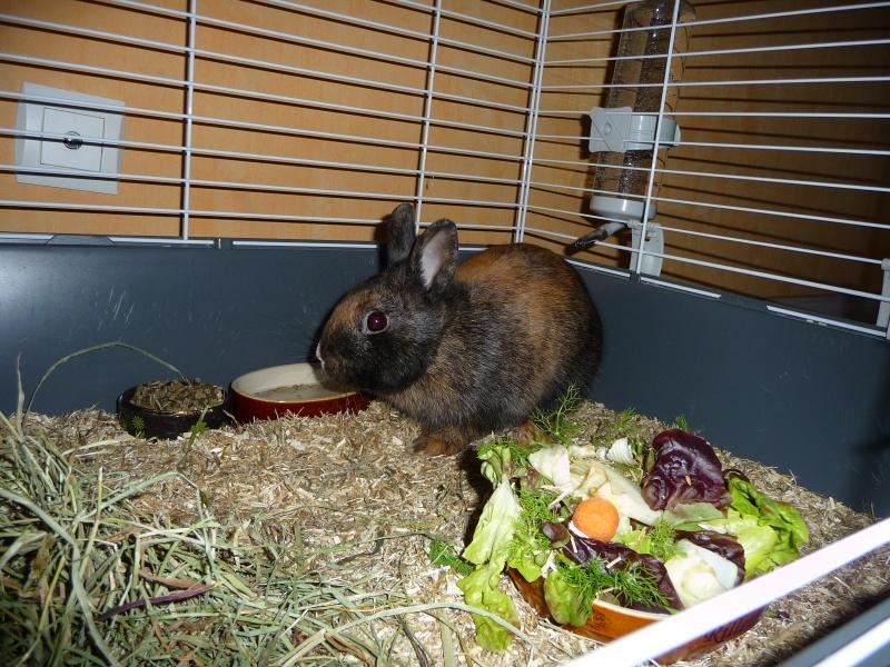 Urgence avant euthanasie - 2 lapins mâles P1160210