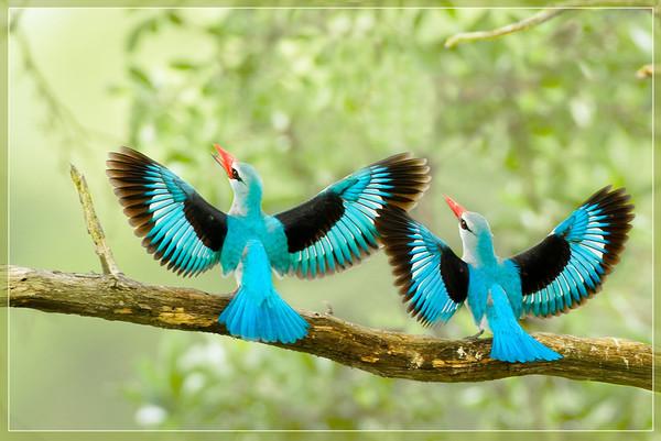 Oiseaux - Page 8 88357f10