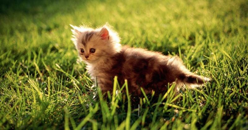 les chats Chats-10