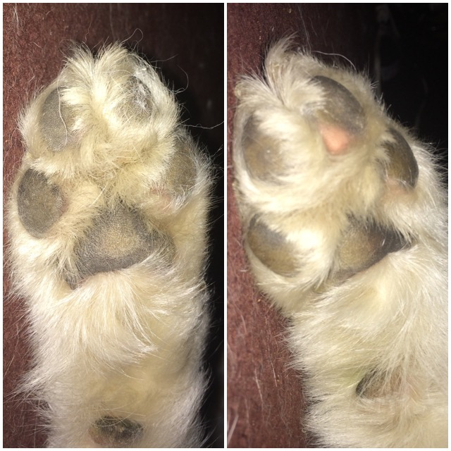 Dry Cracked Paws Image14