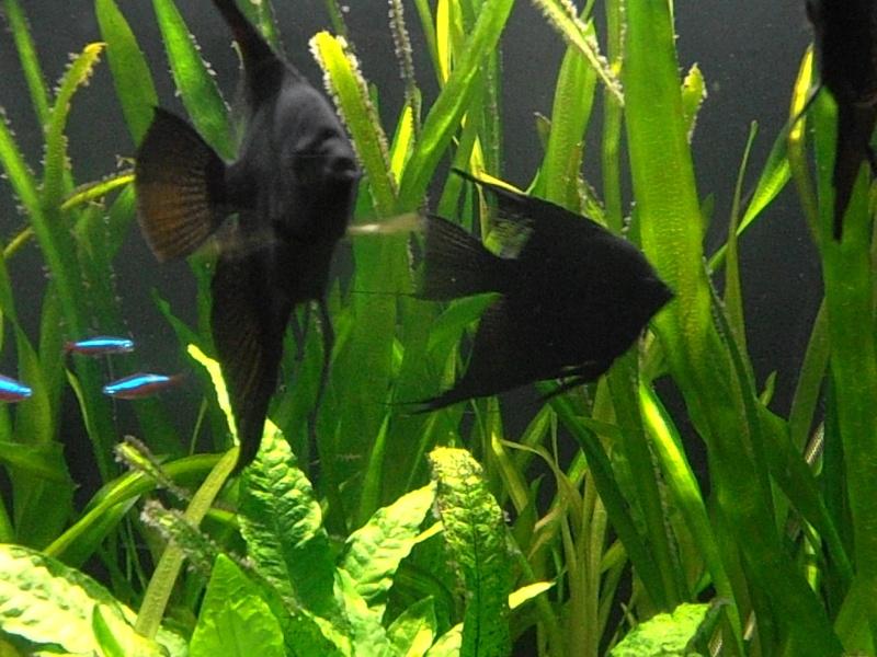 Babies of my black angels  Ol6qvu11