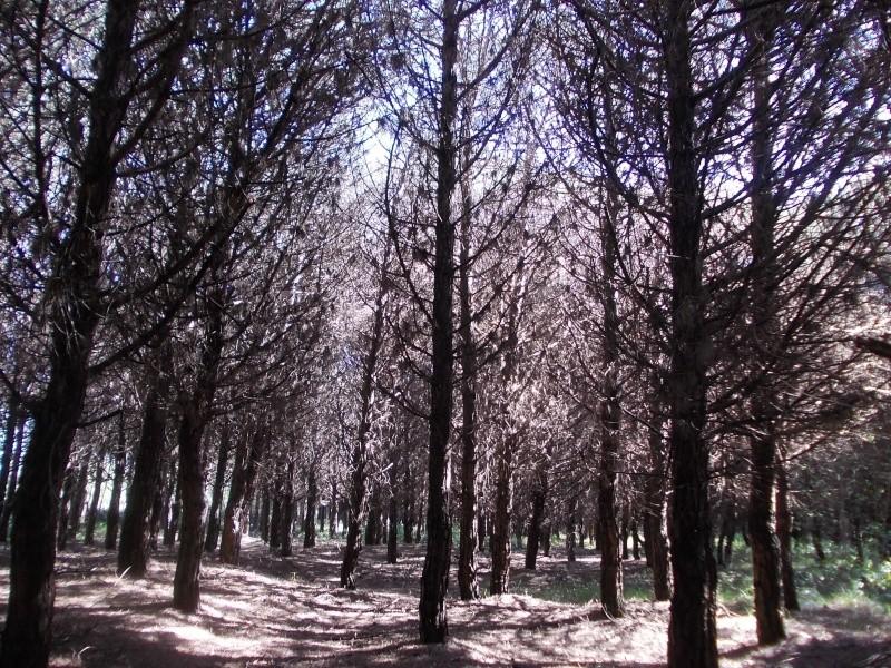 Escursione scalza alla riserva naturale Valle Vecchia Dscn6116