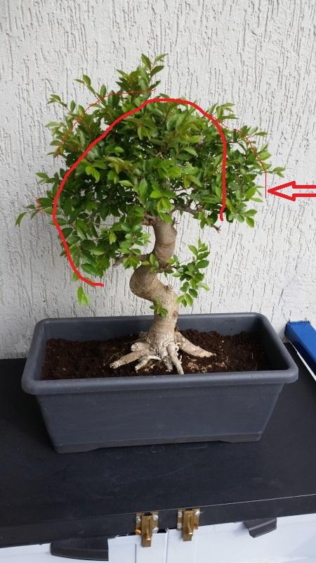 Il mio primo bonsai - Pagina 2 20160419