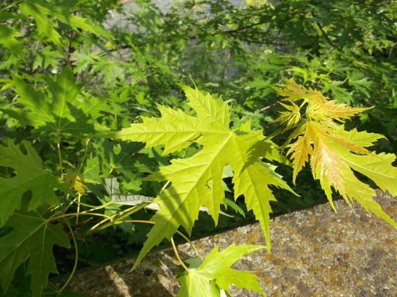 Riconoscimento pianta Dscf1410