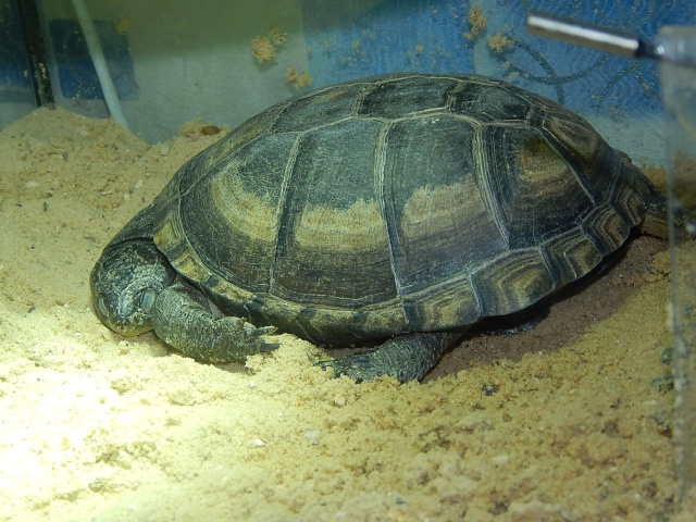 mes 2 petites  tortues - Page 3 Dscn5610