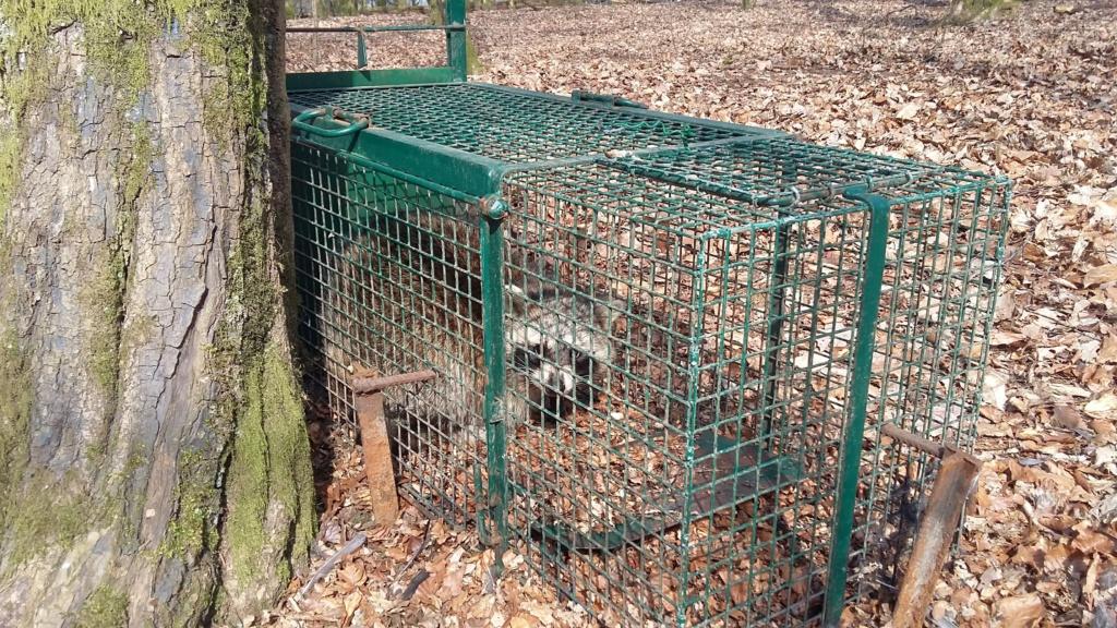 Peste porcine : On est en plein dedans !!! (Partie 3) 2019-023