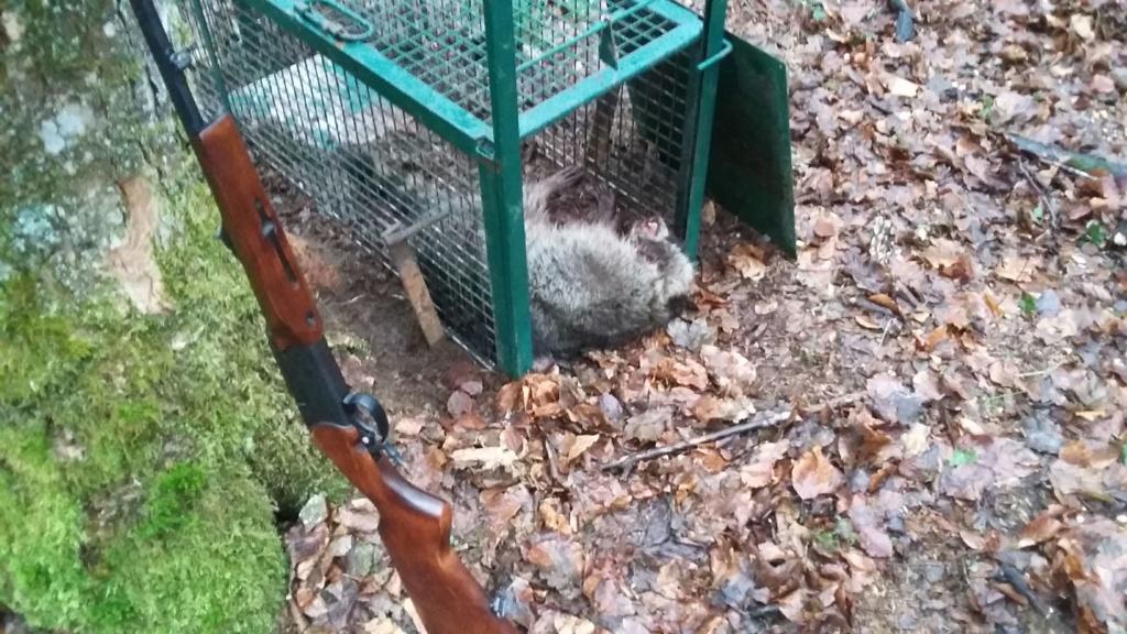 Peste porcine : On est en plein dedans !!! (Partie 3) 2019-024