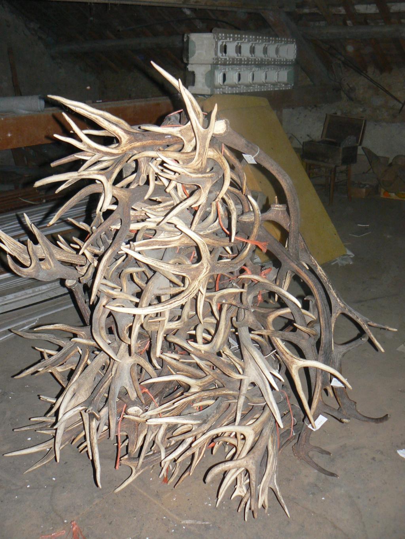 Le bois de cerf sert à tout P1090411