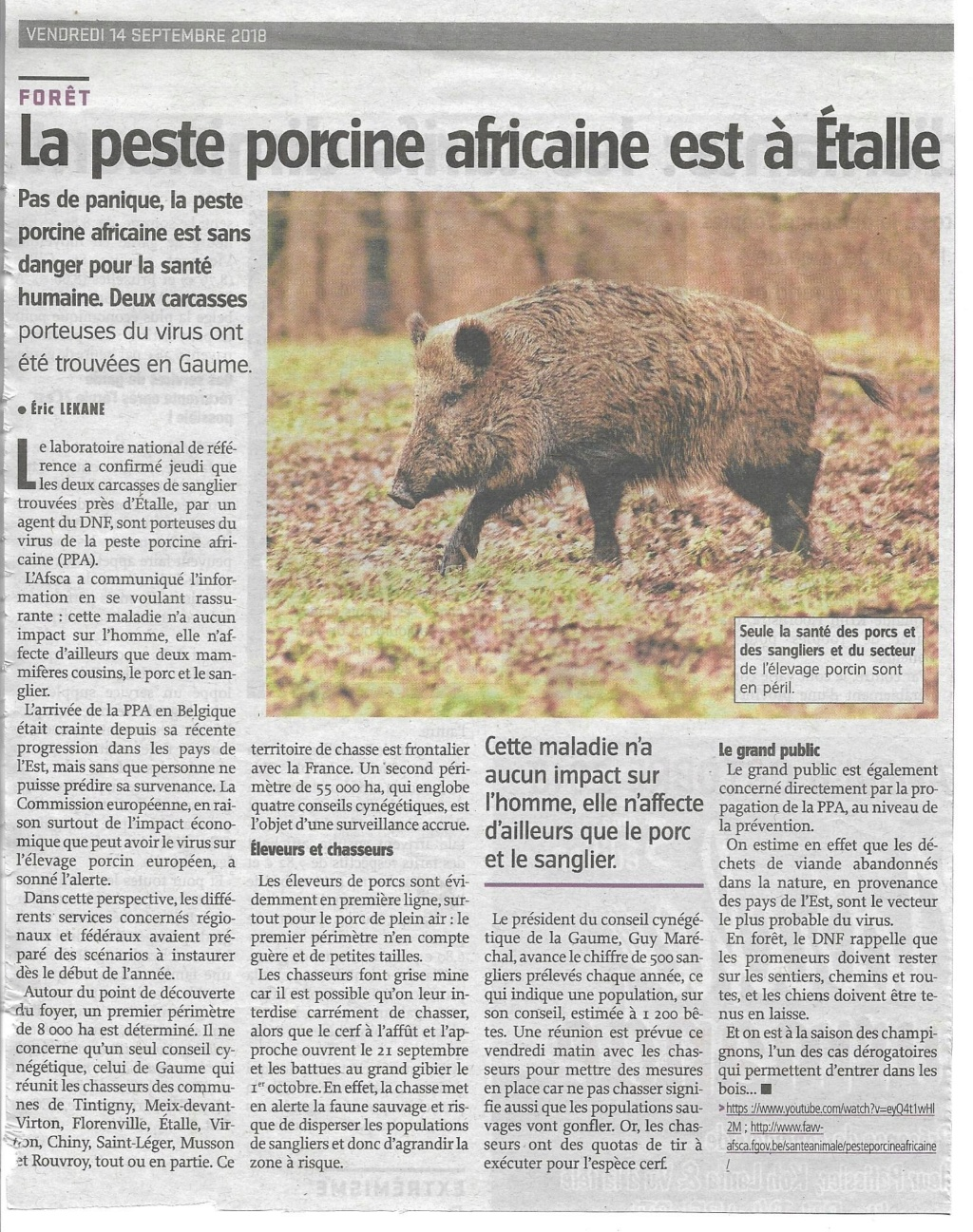 Peste porcine : On est en plein dedans !!! - Page 4 Ppa_av12