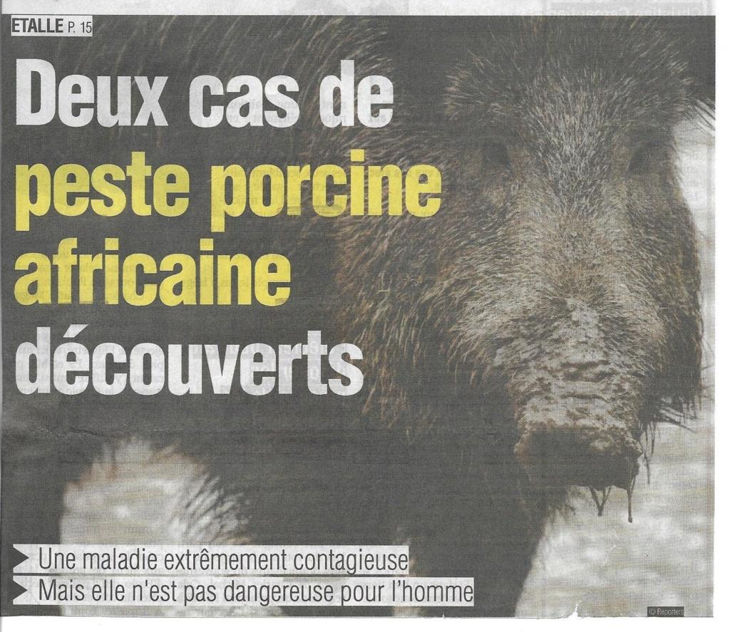 Peste porcine : On est en plein dedans !!! - Page 4 Ppa_la11