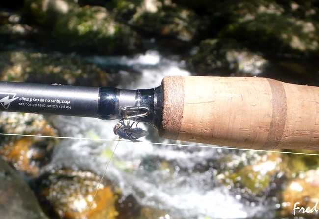 mouche - Prenez la mouche,naturelle! P1050918